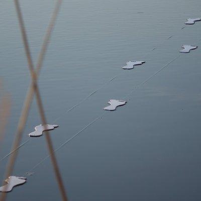 Presenza laghetto lumera 2